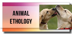Veterinary Conferences 2019 | Animal Sciences Conference