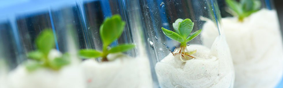 Plant Science Conference-Plant Science Conference