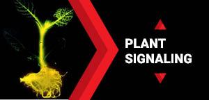 Plant Science Conferences | Plant Biology Conferences